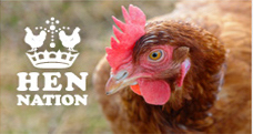 Saving the hens with Hen Nation